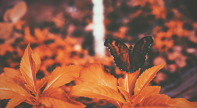 laranja Psicologia das cores: sentimentos e significados