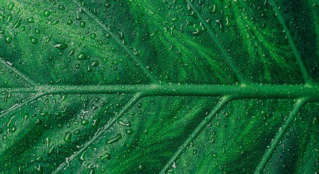 verde Psicologia das cores: sentimentos e significados